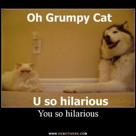 Grumpy Cat Wedding Meme - 31 best funny husk images on pinterest