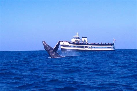 rib boats san diego san diego whale watching tours flagship cruises events