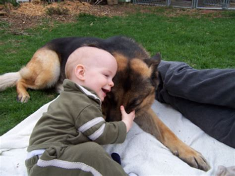 dogs and babies do you believe in dogs and babies not always