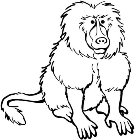 Baboon Coloring Pages baboon coloring page supercoloring