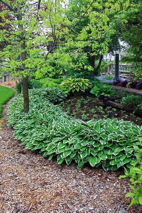 Hosta Garden Ideas Hostas Backyard Idea Gardening Pinterest Beautiful Backyards And Walkways