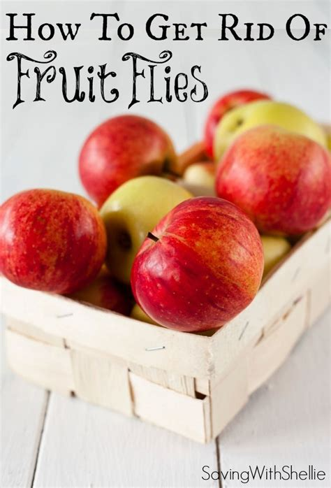 7 Ways To Get Rid Of Fruit Flies by How To Get Rid Of Fruit Flies The Easy Way Helpful