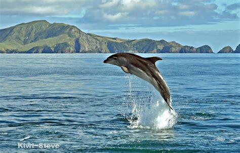 Dolphin On The Sea Iphone Dan Semua Hp 1 wallpaper dolphin sea water images for desktop section