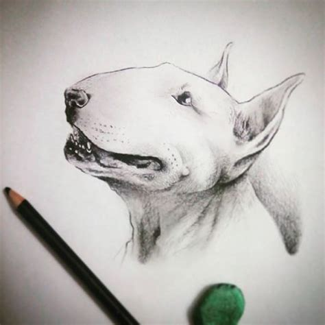 fantastic white bull terrier dog head tattoo design