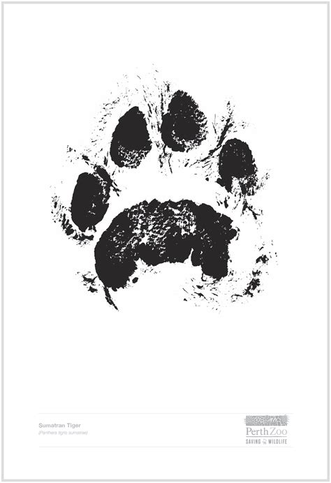 tiger paw print paw prints perth zoo