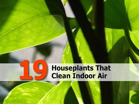 indoor plants to clean air 19 houseplants that clean indoor air