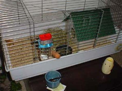 come costruire una gabbia per criceti informazioni di base per un coniglietto felice le e