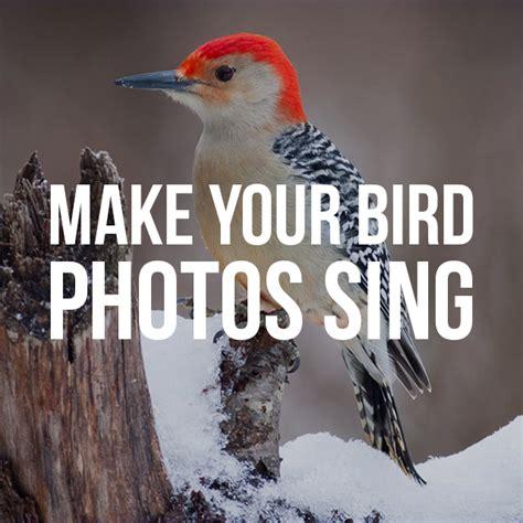 Cing In Your Backyard by How To Make Your Backyard Bird Photos Sing Create