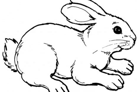 blank bunny coloring page blank coloring page other kids pages printable cute