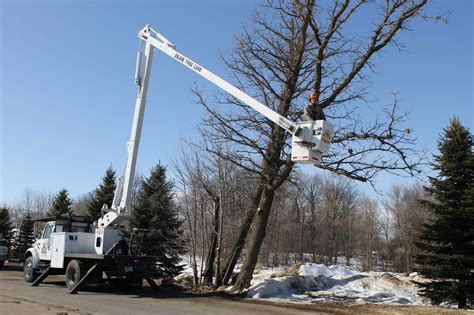 tree trimming tree trimming wright hennepin electric