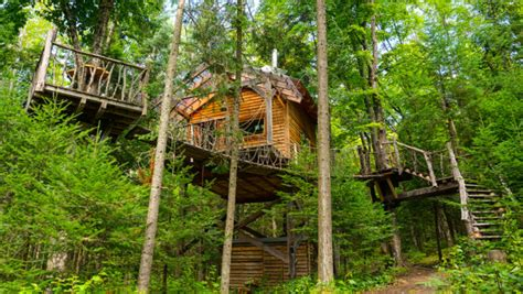 tiny tree house with hanging rope bridge video