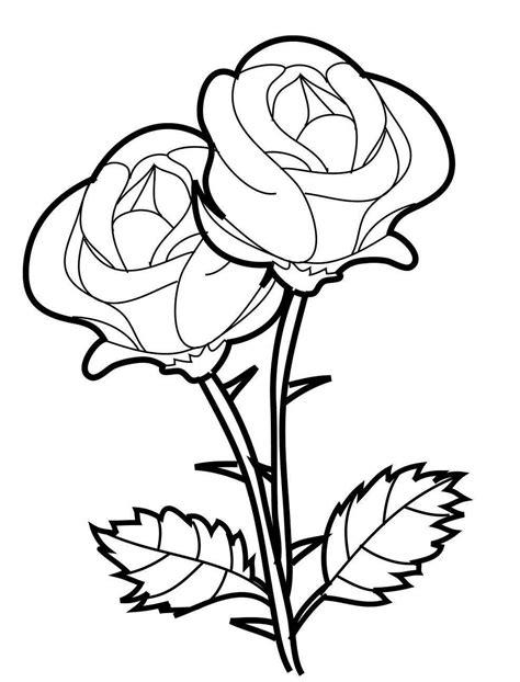 sketsa gambar bunga sepatu  gambar sketsa bunga