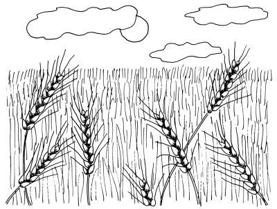 Sketches Grassy Land by Kid S Grassland Drawing Usfws Mountain Prairie Flickr