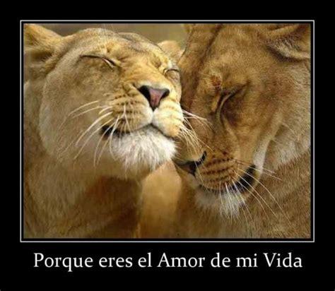 imagenes de leones haciendo el amor pareja de leones enamorados imagui