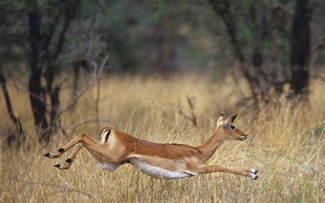 imagenes de animales salvajes de africa animales salvajes de africa imagui