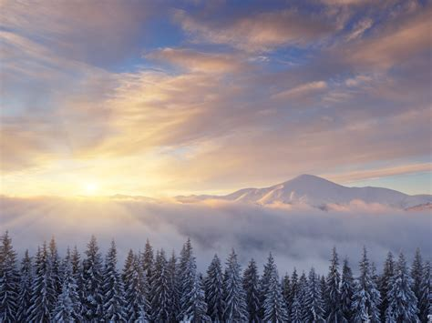 wallpaper sunrise winter mountains pine trees snow