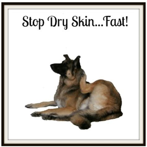 what to do for dogs skin skin this is why your has it now see what to do
