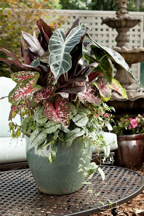 Design For Potted Plants For Shade Ideas 10 Stunning Flower Pot Ideas For Your Home Homestylediary