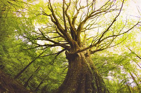 tree  life symbolizes   garden  eden