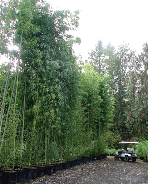 Job In Nursery by Bamboo Garden Nursery