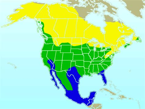 american robin migration map