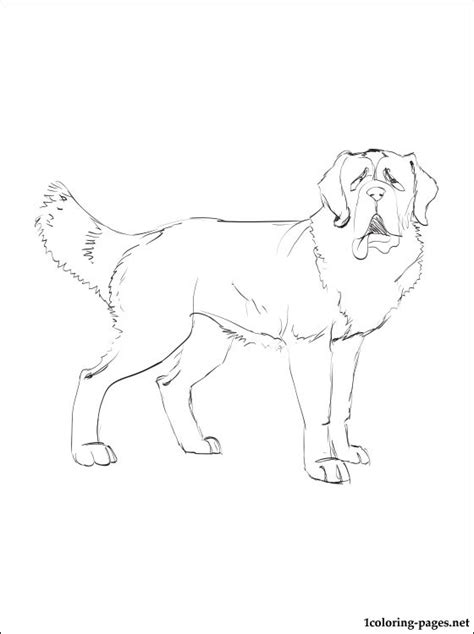 St Bernard Coloring Pages Free Coloring Pages Of St Bernard