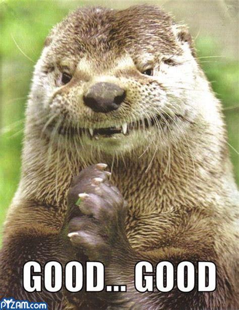 Funny Otter Meme - funny animal 09 05 11
