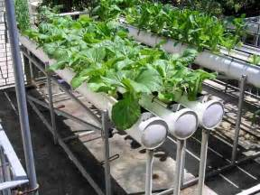 a beginner s guide to hydroponic gardening
