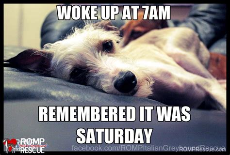 Saturday Memes 18 - saturday memes 18 28 images 1000 ideas about saturday