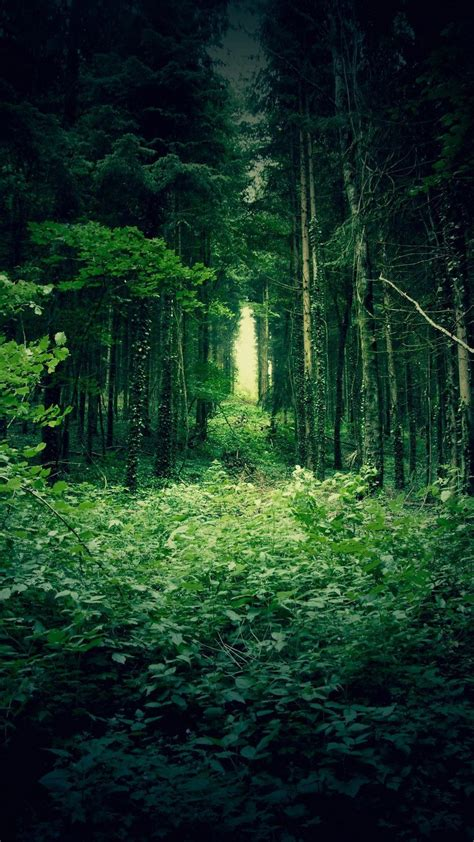 green forest trees  htc  wallpapers