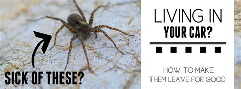 Kill Spiders In House by How To Get Rid Of Spiders In Your Car