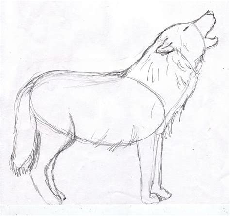 wolf drawing step by step samantha bell