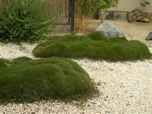 Moss Garden Ideas Moss Garden Garden Ideas