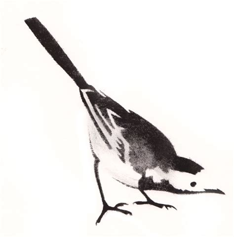 pied wagtail stencil art lucy williams http www