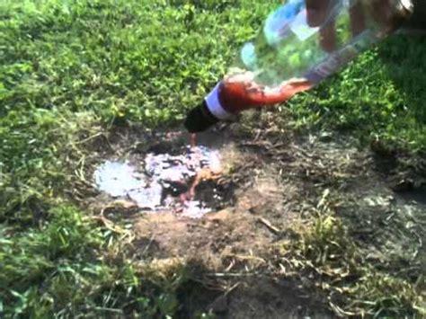 se d 233 barrasser des fourmis astuce jardinage comment se