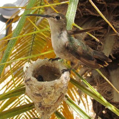 hummingbirds at harbour club villas myturksandcaicosblog com