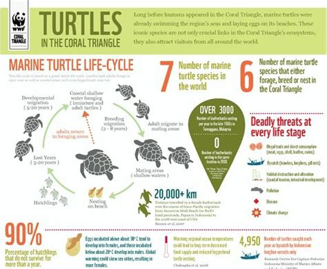 the 25 best turtle facts ideas on sea turtle