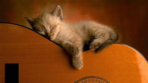 wallpaper kitty cat cute cat wallpaper