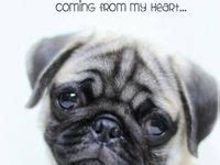 i miss you pug 1000 images about missing you on the pug miss you and i miss you