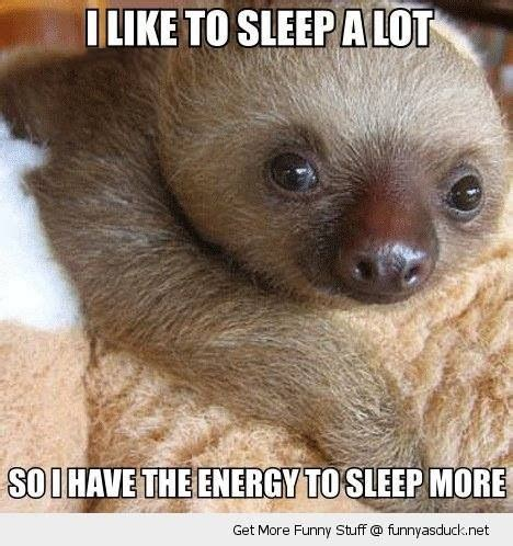 Baby Sloth Meme - funny sloth funny animal photos funny animal quotes
