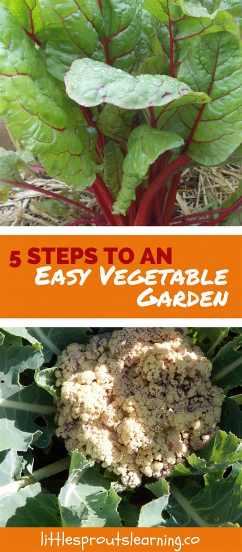 5 steps to an easy vegetable garden sprouts learning