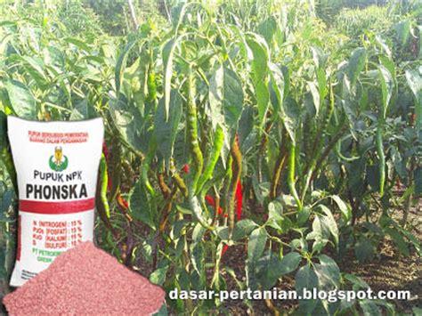 Pupuk Cabai penggunaan pupuk npk phonska pada tanaman cabai dasar