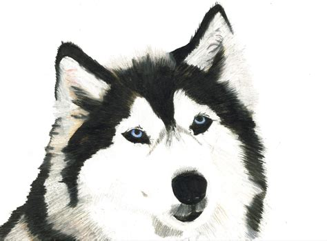 how to a husky how to draw a realistic step by step hairstyles