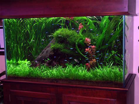 Decoration Of Aquarium by Fish Tank Aquarium Decorating Ideas Aquarium Design Ideas