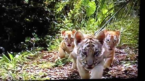 imagenes de animales la selva animales salvajes de la selva youtube