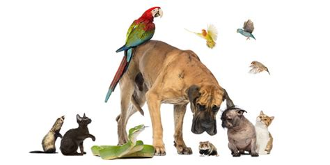 cute small house dogs pet types cute pets small house pets large pets petsopedia