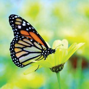 Gw 244h Butterfly plant a butterfly garden 16 acres garden center