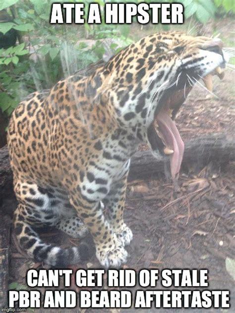 Jaguars Memes - jaguar imgflip