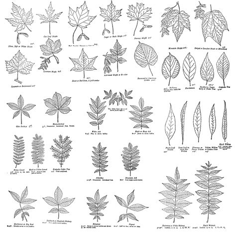 leaf pattern names printable vintage field journal leaves the graphics fairy