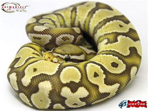 visio python visio python best free home design idea inspiration